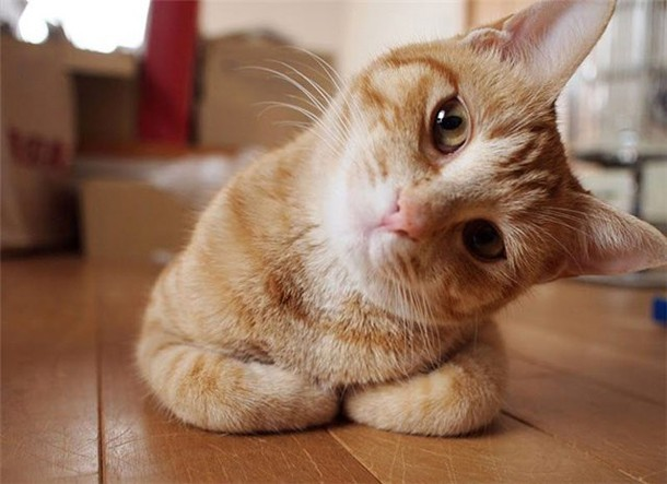 Почему не желательно заводить животных дома