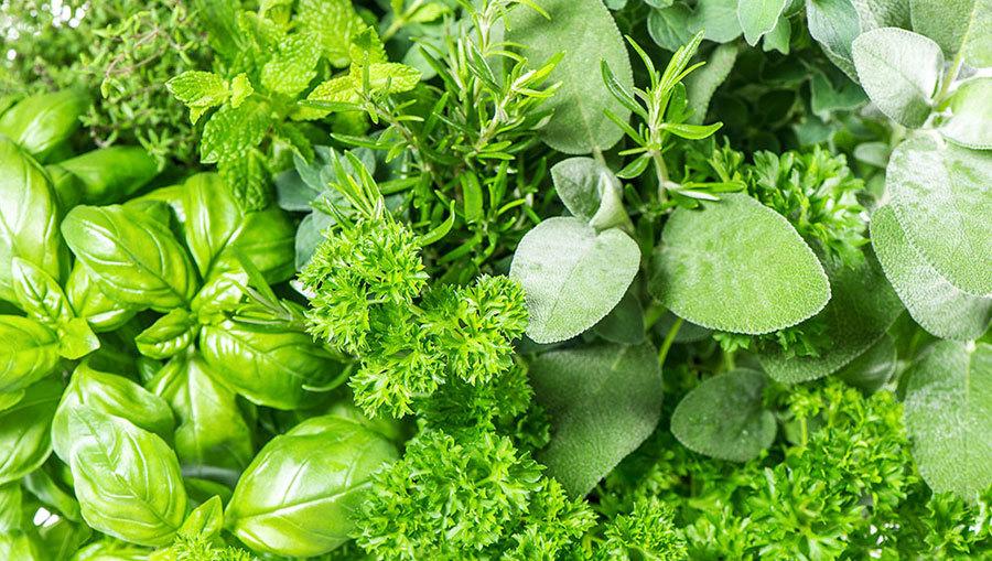 10 фактов о зелени, о которых вы не знали