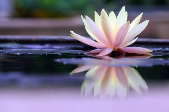 Внешняя и внутренняя чистота как аскеза в благости